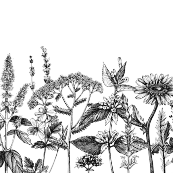 Black and White Botanical Mural